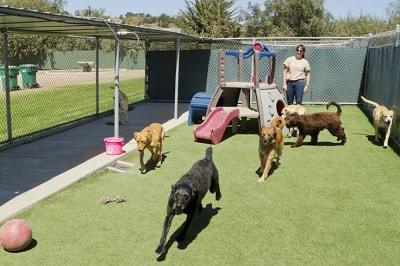 Top 5 Dog Boarding Kennels in Christchurch