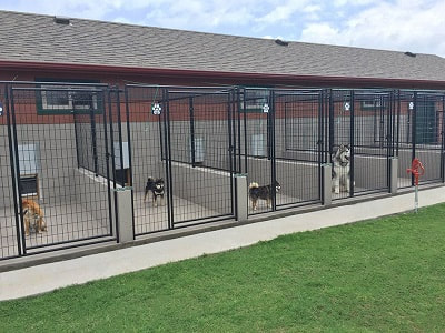 Top 10 Dog Boarding Kennels in Auckland