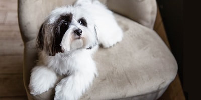 best dog grooming Wellington