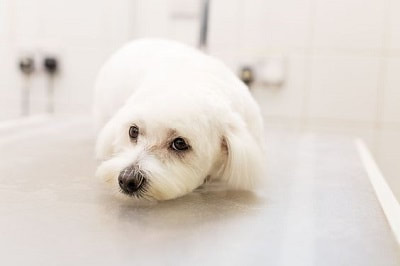 best dog grooming Christchurch